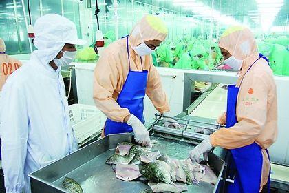 水产品及加工制品快速检测方案